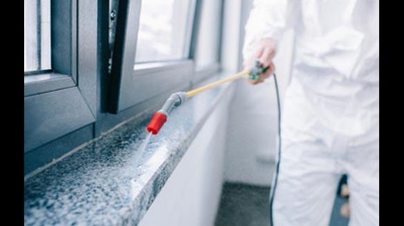 Eco-Friendly Pest Control Services